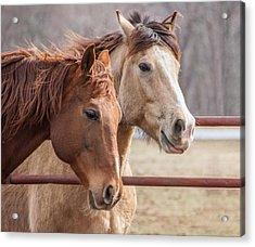 6820 Horses Portrait Acrylic Print by Deidre Elzer-Lento
