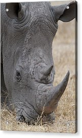 Africa, South Africa, Londolozi Private Acrylic Print