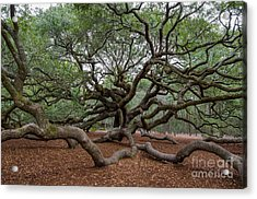 Mighty Branches Acrylic Print