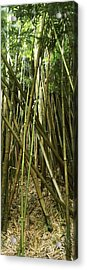 Bamboo Forest, Oheo Gulch, Seven Sacred Acrylic Print by Panoramic Images
