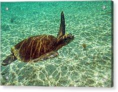 Ecuador, Galapagos National Park Acrylic Print