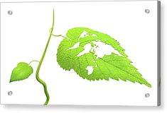 Green Planet Acrylic Print by Andrzej Wojcicki/science Photo Library