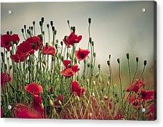 Poppy Meadow Acrylic Print by Nailia Schwarz