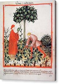 Tacuinum Sanitatis, Medieval Health Acrylic Print by Prisma Archivo