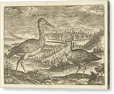 Two Birds In A Landscape, Adriaen Collaert Acrylic Print