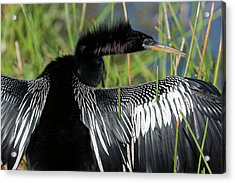 Usa, Florida, Everglades National Park Acrylic Print by Jaynes Gallery