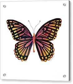 70 Sunrise Mime Butterfly Acrylic Print