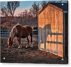 7056 Horse Shadow Acrylic Print by Deidre Elzer-Lento