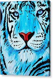 Blue Bengal Acrylic Print