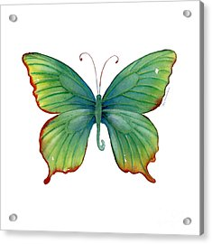 74 Green Flame Tip Butterfly Acrylic Print by Amy Kirkpatrick