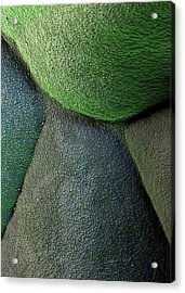 Broccoli Acrylic Print by Stefan Diller