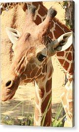 Giraff Acrylic Print by Tinjoe Mbugus