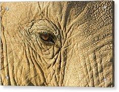 Kenya, Samburu National Reserve Acrylic Print