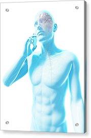 Person Using A Mobile Phone Acrylic Print by Sebastian Kaulitzki
