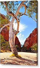 Simpsons Gap Acrylic Print