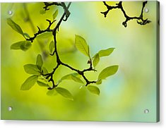 Spring Green Acrylic Print by Nailia Schwarz