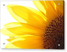 Sunflower  Acrylic Print by Cindi Ressler