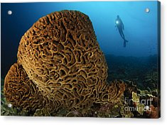 The Salvador Dali Sponge With Intricate Acrylic Print by Steve Jones