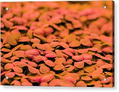 Underground Horticulture Acrylic Print by Louise Murray