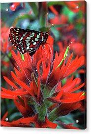 Usa, Oregon, Mt Hood National Forest Acrylic Print