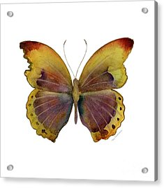 84 Gold-banded Glider Butterfly Acrylic Print