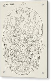 Anatomical Drawing Acrylic Print by British Library