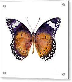 87 Cethosia Cyane Butterfly Acrylic Print by Amy Kirkpatrick