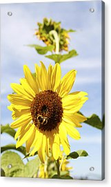 Bee On Flower Acrylic Print by Les Cunliffe