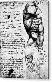 Leonardo: Anatomy Acrylic Print