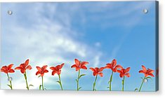 9 Lilies Acrylic Print
