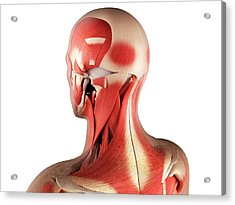 Male Musculature, Artwork Acrylic Print by Sciepro