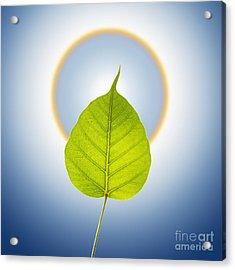 Pho Or Bodhi Acrylic Print