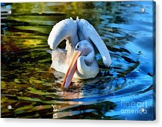 Pink Backed Pelican Acrylic Print by George Atsametakis