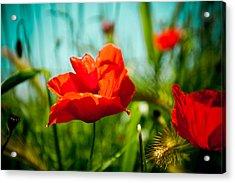 Poppy Field And Sky Acrylic Print by Raimond Klavins