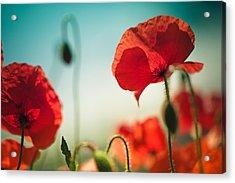 Summer Poppy Acrylic Print by Nailia Schwarz