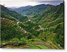 The Rice Terraces Of The Philippine Acrylic Print