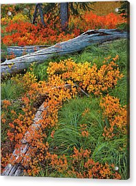 Usa, Oregon, Willamette National Forest Acrylic Print