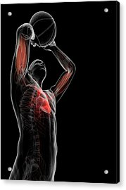 Male Anatomy Acrylic Print by Sciepro/science Photo Library