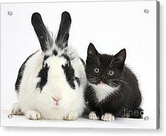 Kitten And Rabbit Acrylic Print by Mark Taylor