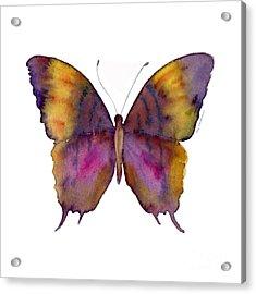 99 Marcella Daggerwing Butterfly Acrylic Print by Amy Kirkpatrick
