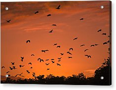 Birds At Sunset Acrylic Print