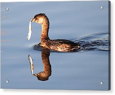 Acrylic Print featuring the photograph A Bad Reflection by Kathy Gibbons
