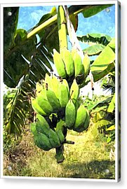 A Banana Field In Late Afternoon Sunlight With Sky And Clouds Acrylic Print by Lanjee Chee