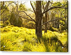 A Bare Tree Acrylic Print