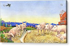 A Barnyard Of Pigs Acrylic Print by Anne Gifford