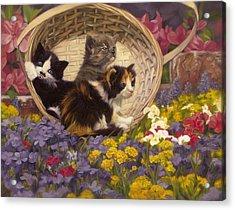 A Basket Of Cuteness Acrylic Print