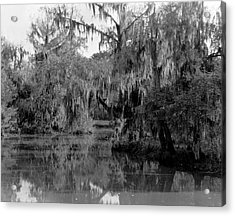 A Bayou Scene In Louisiana Acrylic Print by Underwood Archives
