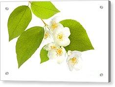 A Beautiful White Flower Acrylic Print