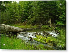 A Beaver Dam Overflowing Acrylic Print by Jeff Swan