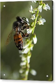 Acrylic Print featuring the photograph A Bee About His Business by Richard Stephen